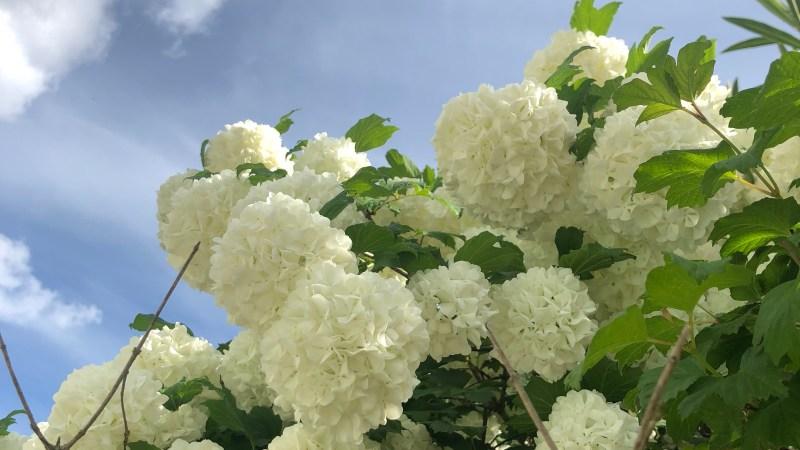 Vert banal?… Lundi Soleil 30/04/2018