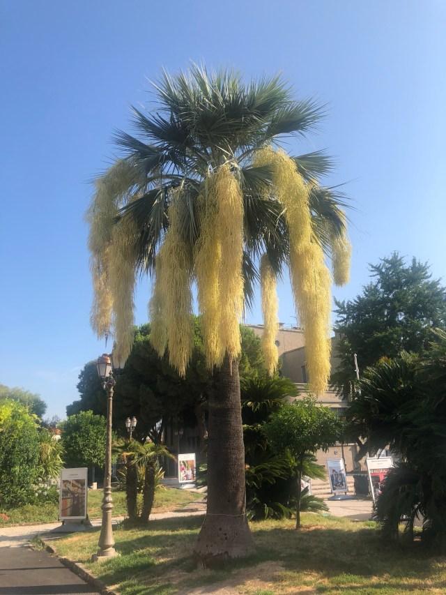 Themouse, 50 ans, Quinqua, eev, humeur, antibes, palmier