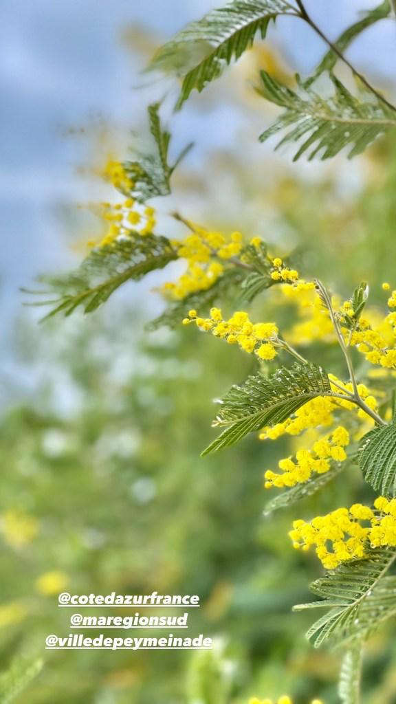 côte d'azur france, bloganniversaire, mimosa, cote d'azur, ma region sud, le blog a 7 ans, montagne, peygros, plaisir des yeux, lundi soleil, anniversaire,