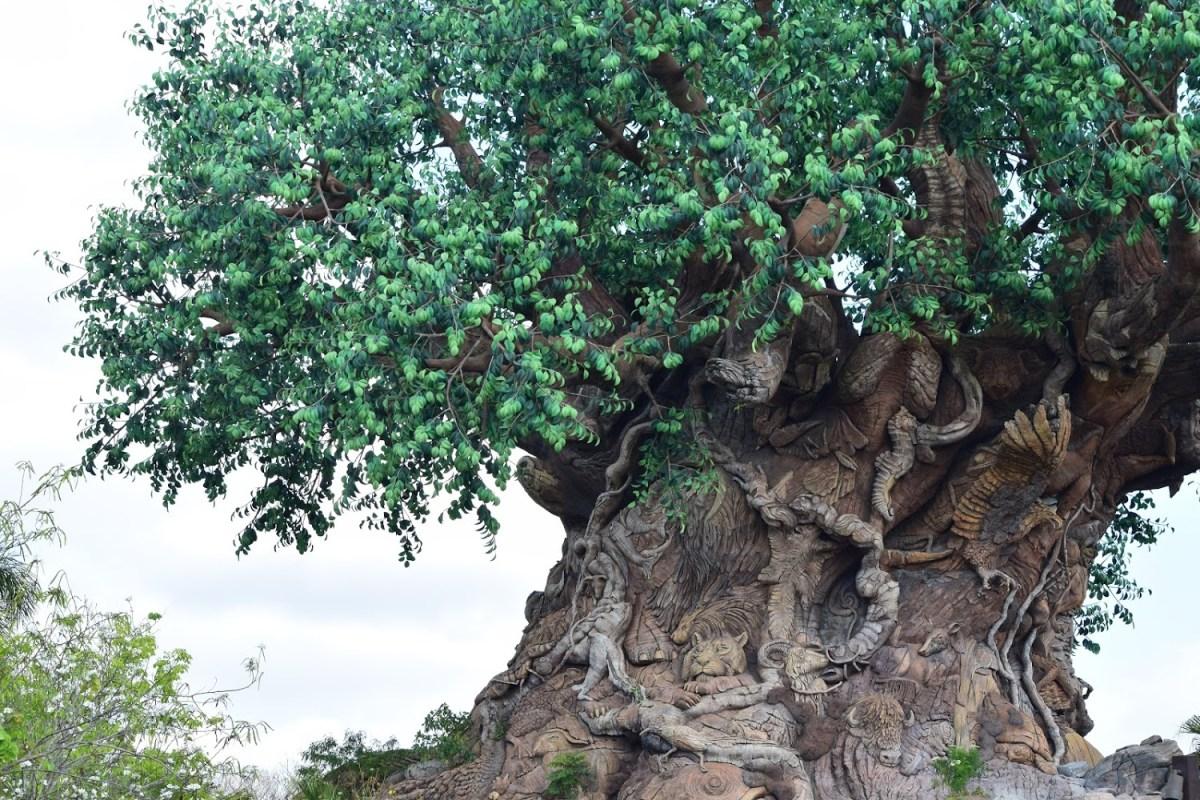 Tree of Life Backstory