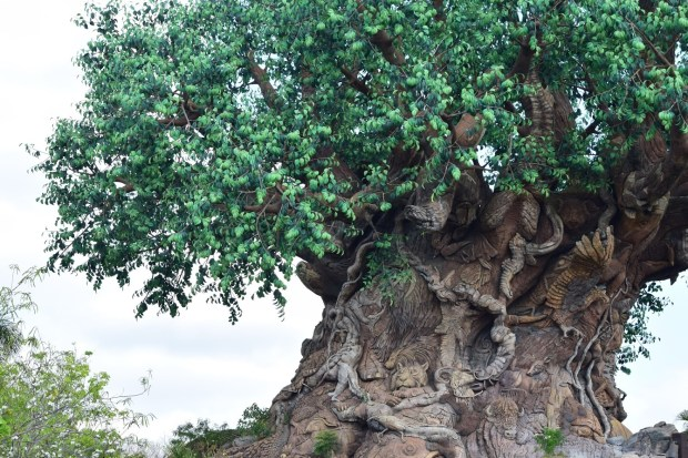 Tree of Life Backstory