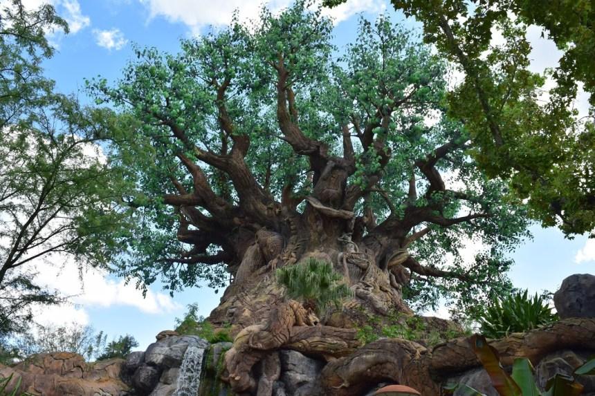 Tree of Life paths