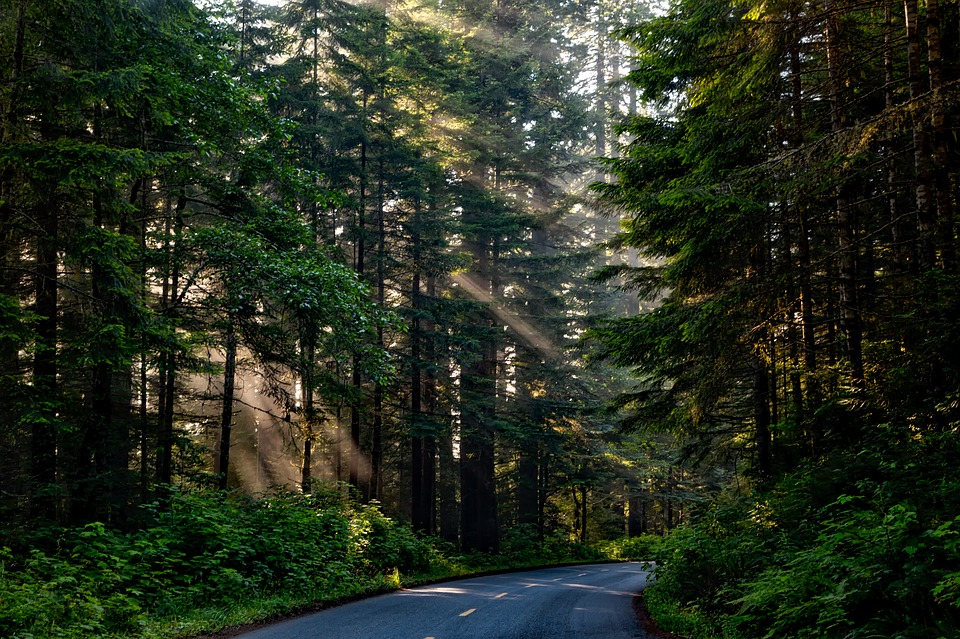 Romantic forests of California