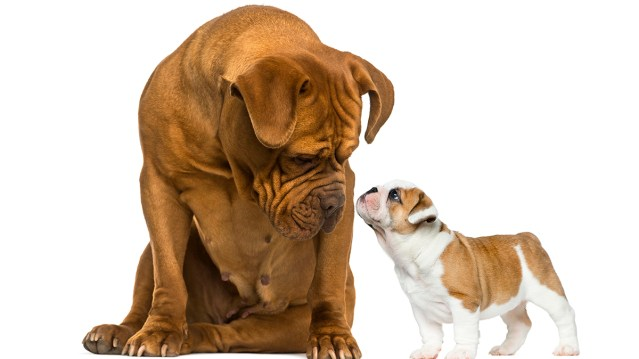 Pet size has no relation to apartment damage