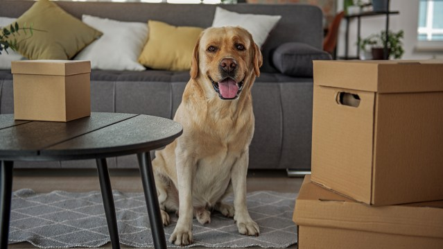Pets cited as reason to move from Multifamily