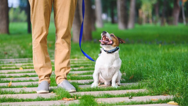 Taking care of multifamily pet owners