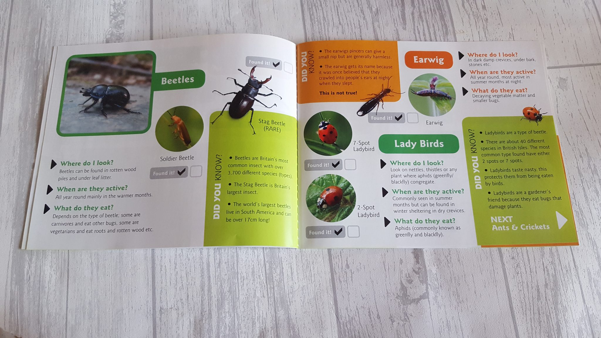 Contents of Bug Safari Kit