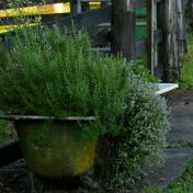 herbs farmstay