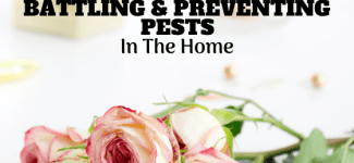 Top Tips for Battling and Preventing Pest Problems in Your Home