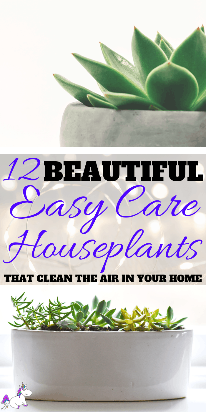 12 Beautiful Easy Care Plants That Clean The Air in Your Home   Interior design inspiration   Air purifying plants   Indoor plants   Houseplants that clean the air   Via: https://themummyfront.com #themummyfront.com #houseplants #healthtips #healthyliving #plantcare