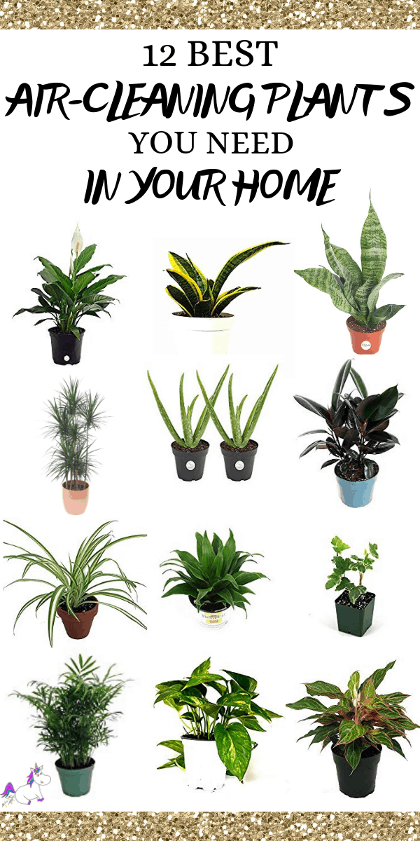 12 Best Air Cleaning Houseplants That Are Hard To Kill ( No Green Thumbs Needed)   Indoor plants   air purifying plants   Plants that clean air   Indoor plants that clean air   Home decor tips   Healthy home   Healthy Living Via https://themummyfront.com #aircleaninghouseplants #indoorplants #bestindoorplants #airpurifyingplants #homedecorinspiration