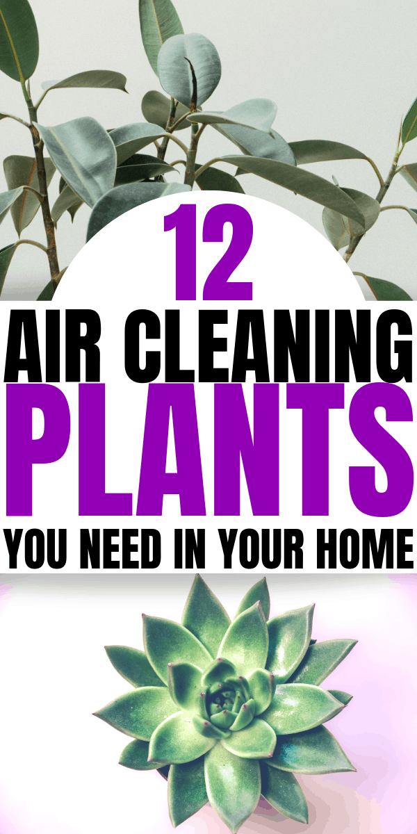 12 Air Cleaning Plants You Need In Your Home   Interior design   Air purifying plants   Indoor plants   Houseplants that clean the air  Home decor inspiration   healthy living   Via: https://themummyfront.com #themummyfront.com #houseplants #healthtips #healthyliving #plantcare