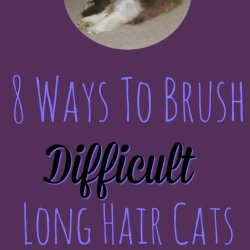 "8 Ways To Brush Difficult Cats - The Help you need so your cat can have their best ""furday"""