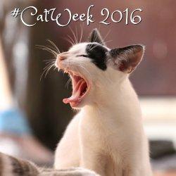 #Catweek2016 feature image