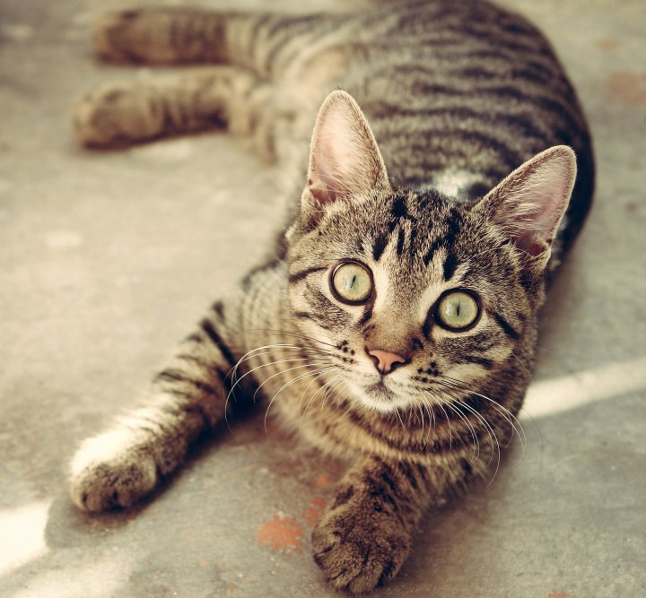 cute kitty - 8 ways animals are part of the family