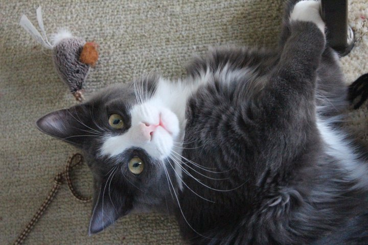 cat toy playing, fundraising idea