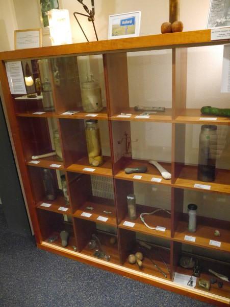 The Icelandic Phallological Museum