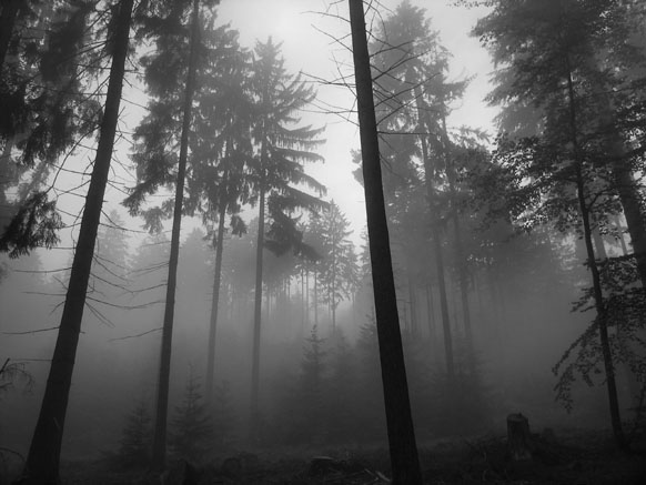 foggy_forest_2_2592-865153