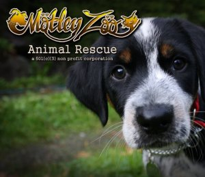 Click here to learn more about Motley Zoo