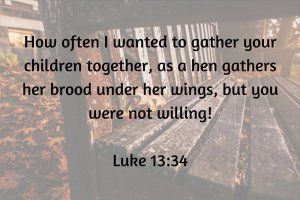 ow often I wanted to gather your children together, as a hen gathers her brood under her wings, but you were not willing!