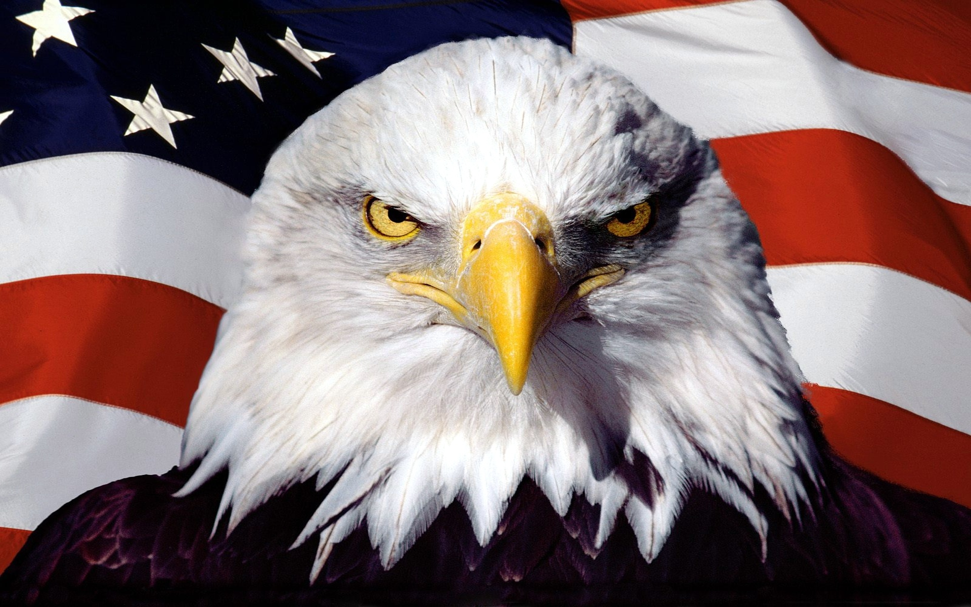 American-Flag-Eagle-Pictures-Images-Phot