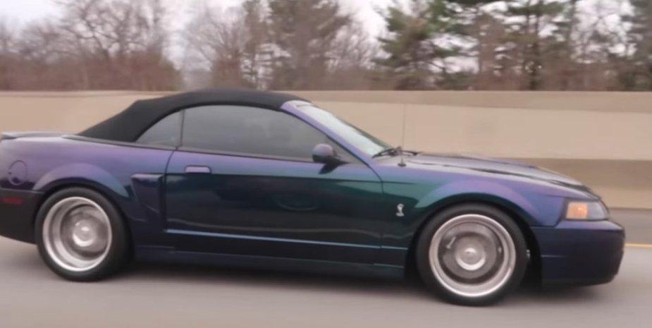 Terminator Cobra Mustang Pull