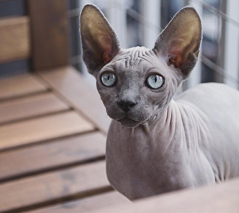 top 10 smallest cat