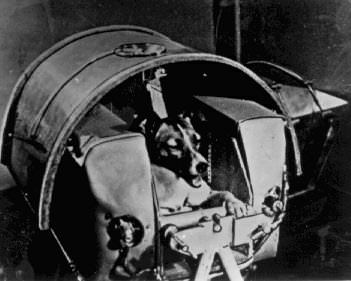 first dog Laika in space