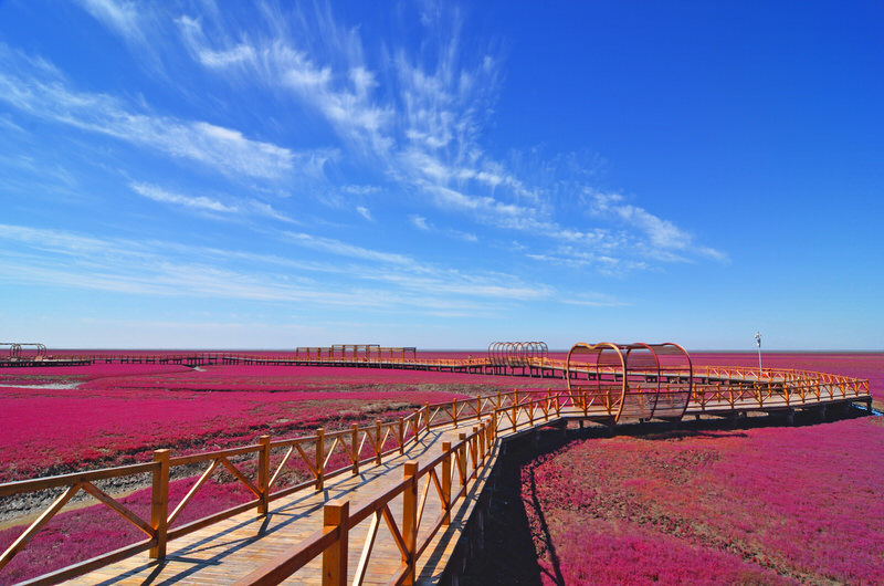 Aerial view of incredible Red Beach in Panjin, China.