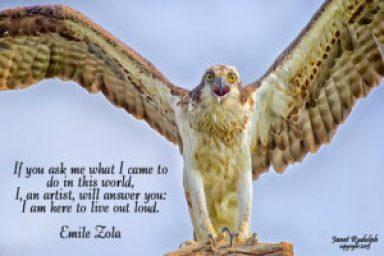 Osprey with Zola quote