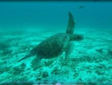 Sea Turtle-5