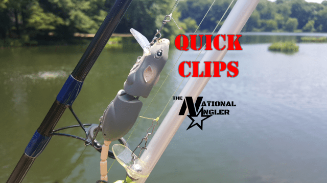 Quick Clips Terminal Tackle