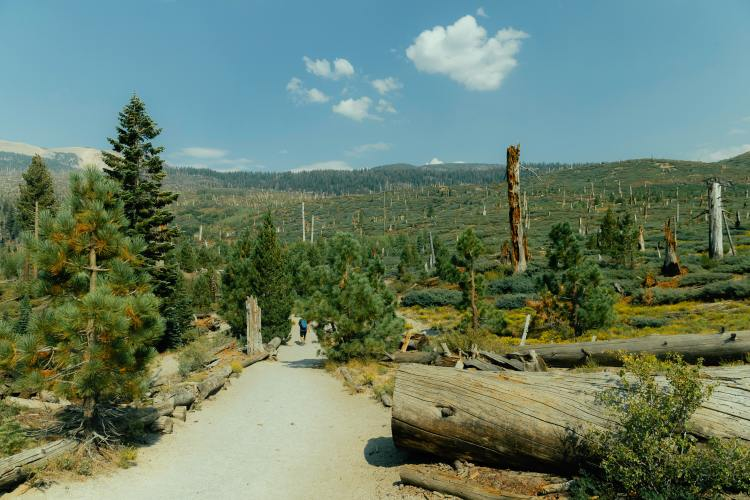 Hikers in Inyo National Forest