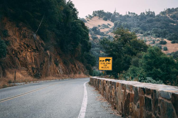 A mountain road in Sequoia National Forest