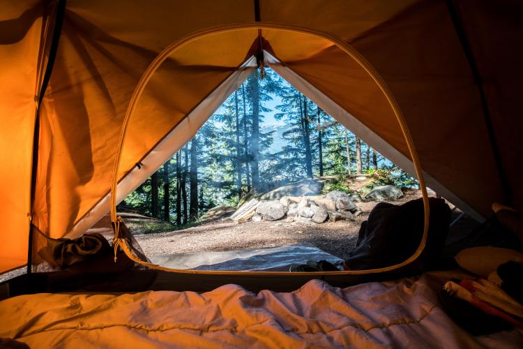 A view of the forest from the inside of a tent - Stanislaus National Forest has many great campgrounds.