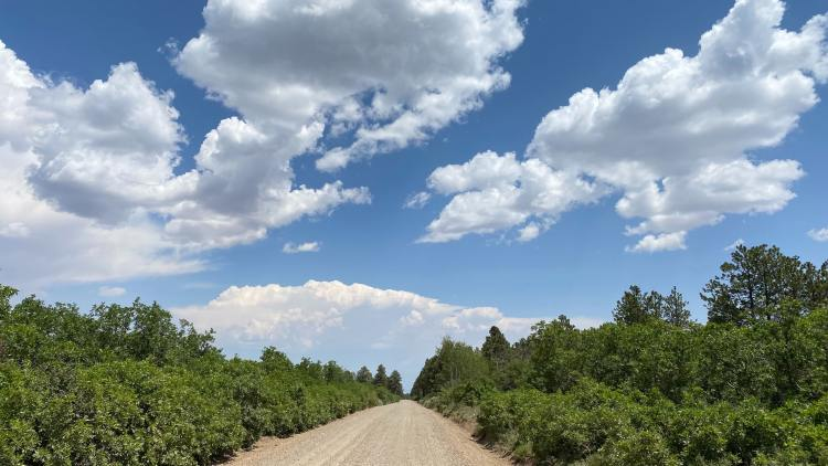 A forest service road in Grand Mesa National Forest