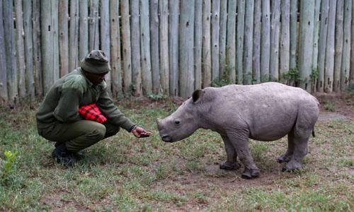 607 arrested for wildlife crime, says NPS - The Nation Newspaper