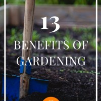 13 Unexpected Benefits of Gardening