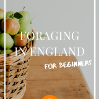 Foraging in England for Beginners