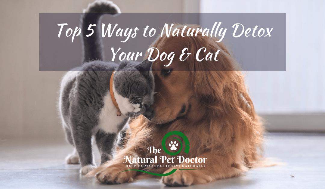 Top 5 Ways to Naturally Detox Your Dog & Cat