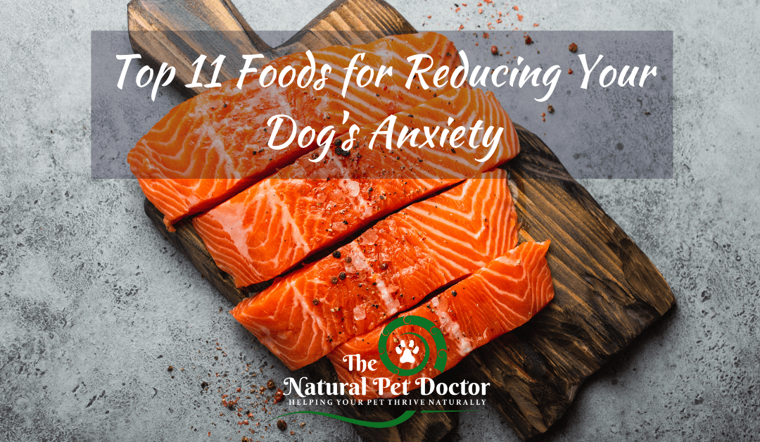 Top 11 Foods for Reducing Your Dog's Anxiety
