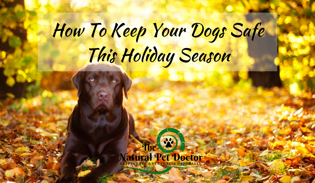 How To Keep Your Dogs Safe This Holiday Season