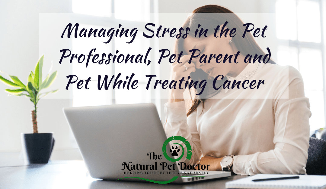 How To Naturally Manage Stress When Your Pet Has Cancer