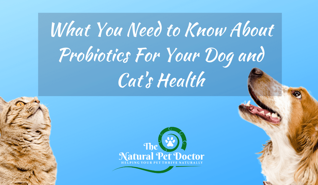 Best Probiotics For Your Dog and Cat's Health