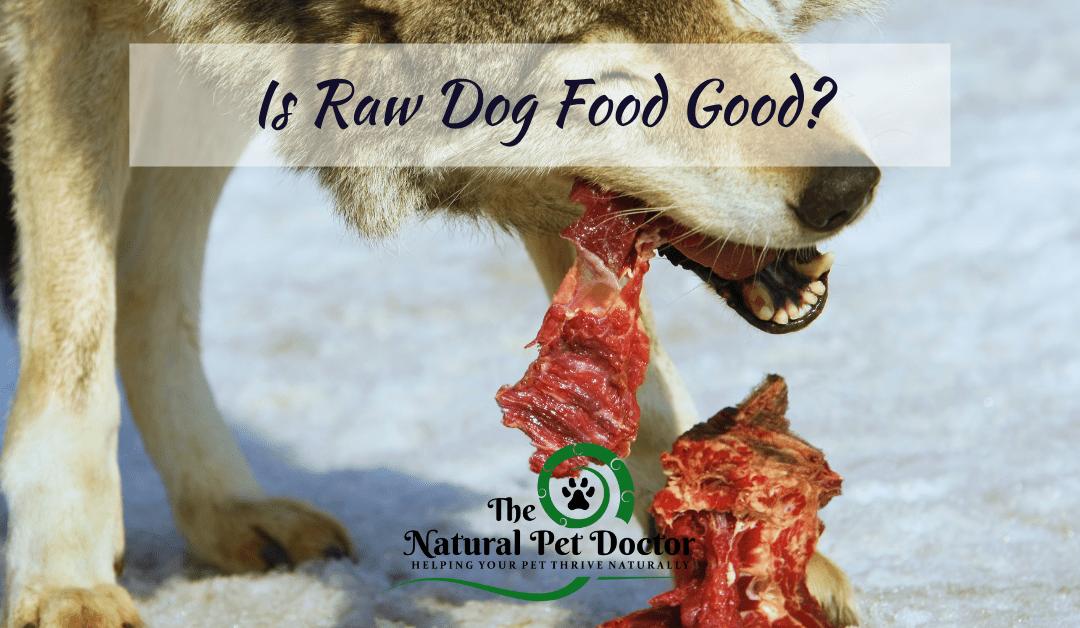 Is Raw Dog Food Good?