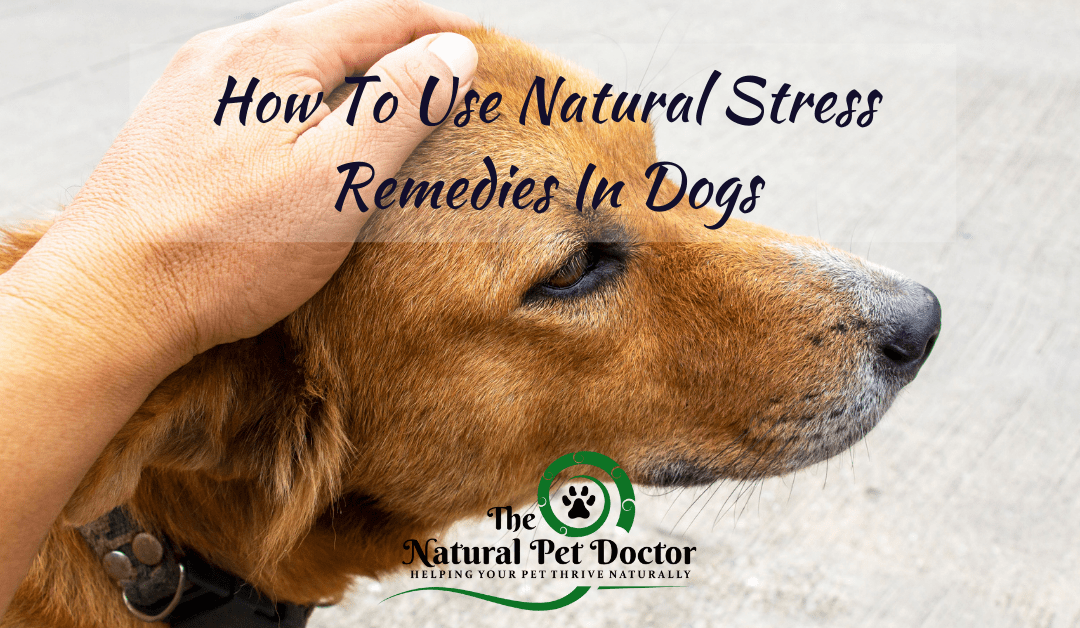 How To Use Natural Anxiety Remedies In Dogs