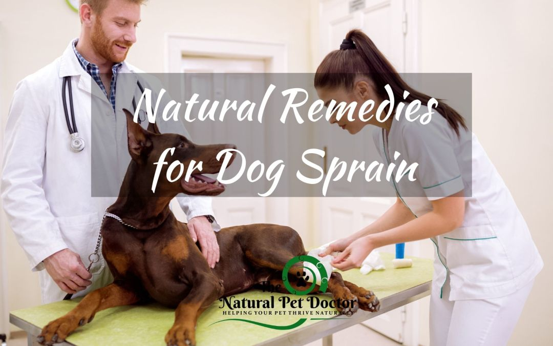 Top Natural Remedies for Dog Leg Sprains