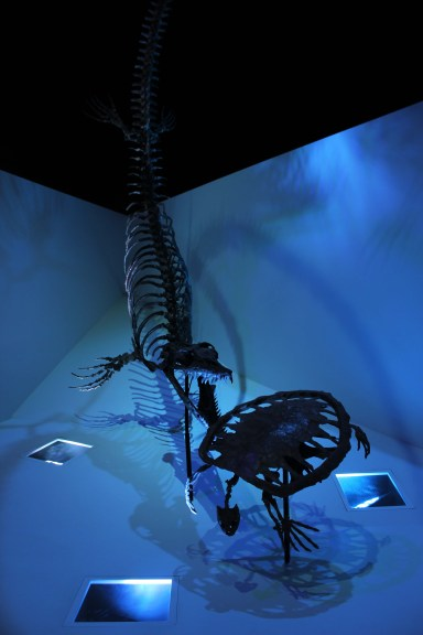 Mounted skeletons of the sea turtle Toxochelys and the mosasaur Plioplatecarpus on display at the Houston Museum of Natural Science in Texas with Cian Kinderman Photo Credit Zack Neher