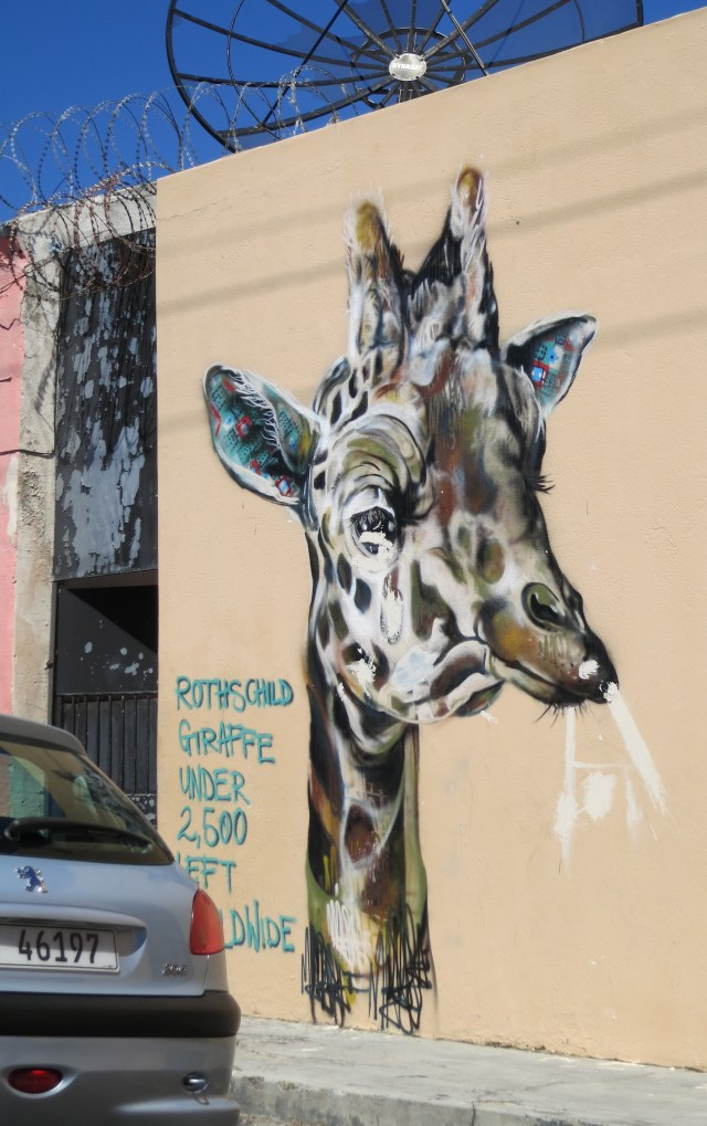 The conservation status of Rothschild Giraffe, in Cape Town. Photo: Jaques de Satage