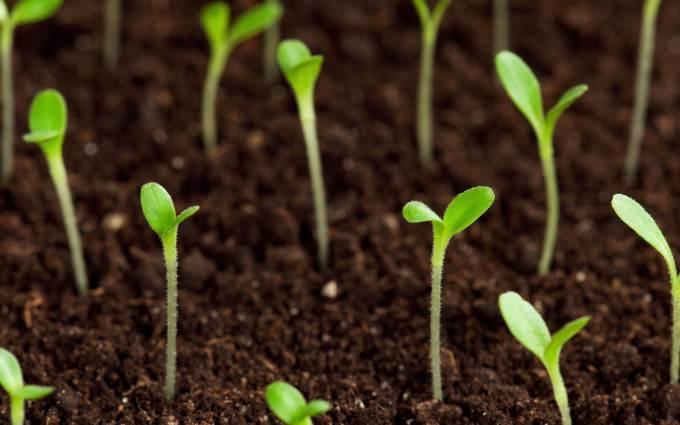 Growing-Plants.jpg